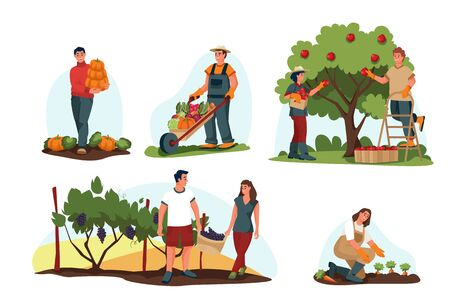 Fall harvesting and agriculture farming concept. Vector flat cartoon illustration. Farmers harvest autumn vegetables and fruits. People pick apples, pumpkins and grapes.