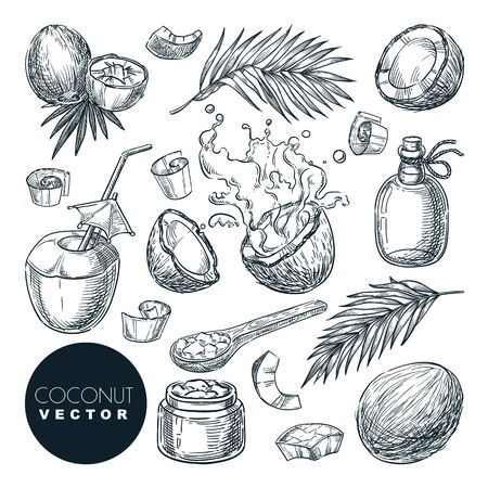 Coconut sketch vector illustration. Broken coco nuts with milk splashes, butter, oil and palm leaves. Hand drawn isolated design elements. Food vegetarian organic products.