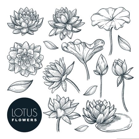 Lotus beautiful blooming flowers and leaves set, isolated on white background. Vector hand drawn sketch illustration. Tropical plants and floral nature design elements. Ilustracja