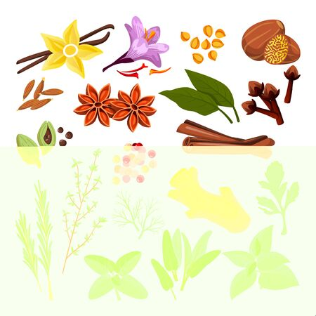 Spices and herbs set. Vector flat cartoon illustration, isolated on white background. Cinnamon, pepper, anise, clove, ginger, cooking icons and design elements. 向量圖像