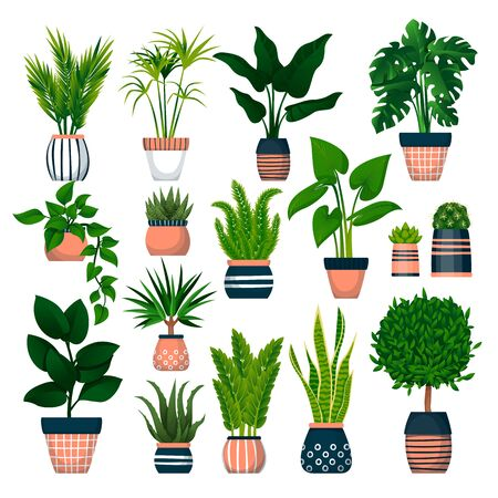 Home plants in decorative pots, isolated on white background. Vector flat cartoon illustration of green potted houseplants. House room decoration design elements. Ilustracja