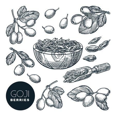 Goji berries sketch vector illustration. Wolfberries harvest in wooden bowl. Hand drawn gojiberries isolated design elements.
