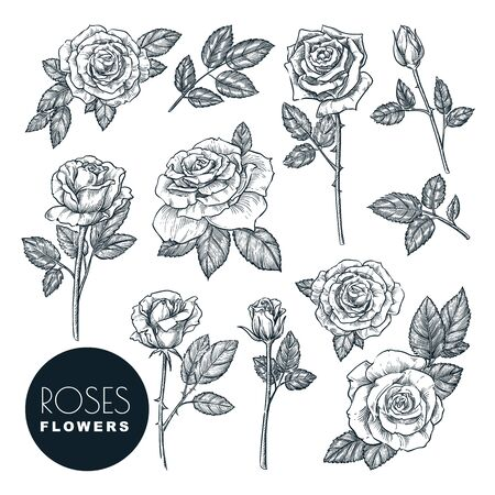 Roses flowers set, vector sketch illustration. Hand drawn floral nature design elements. Rose blossom, leaves and buds isolated on white background. Ilustracja