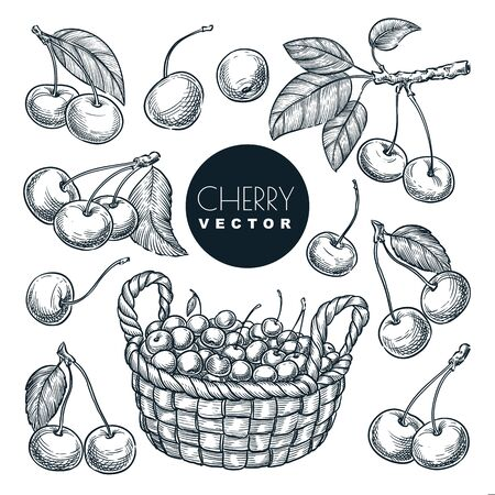 Cherry berries sketch vector illustration. Sweet berries harvest in wooden basket. Hand drawn garden agriculture and farm isolated design elements.