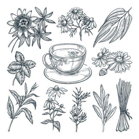 Ensemble d'herbes de thé médical, isolé sur fond blanc. Illustration de croquis dessinés à la main de vecteur. Tasse avec collection de boissons et d'ingrédients naturels sains à base de plantes.
