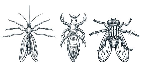 Bloodsucking insect parasites icons. Vector hand drawn sketch illustration. Top view bugs. Mosquito, louse, flea and fly, isolated on white background