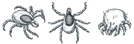 Bloodsucking ixodes ticks and dust mite bug icons, isolated on white background. Vector hand drawn sketch illustration. Insect parasites whose bites are dangerous to humans