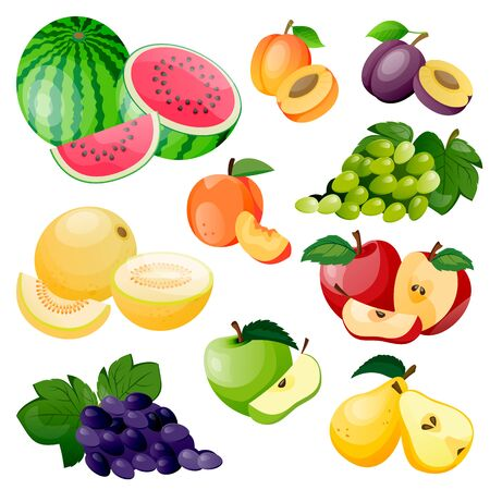 Juicy berries and fruits icon collection. Vector flat cartoon illustration. Fresh watermelon, melon, apricot, grape and plum isolated on white background. Healthy sweet food design elements  イラスト・ベクター素材