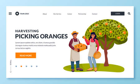 Seasonal harvesting and agriculture farming concept. Happy young hispanic man and woman picking ripe oranges into basket in fruit garden. Vector flat cartoon people characters illustration Ilustração