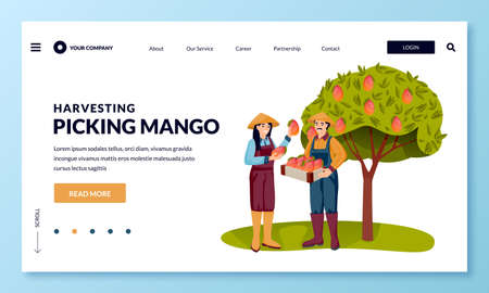 Seasonal harvesting and Asia agriculture farming concept. Happy young asian man and woman picking ripe mango into basket in fruit garden. Vector flat cartoon people characters illustration