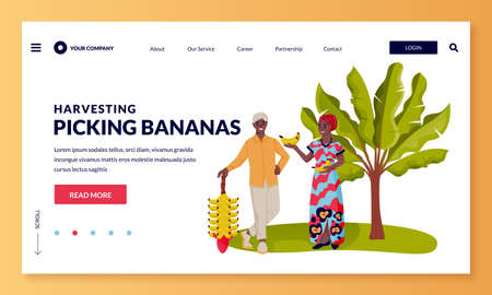 Seasonal harvesting and Equador or India agriculture farming concept. Happy young african or indian man and woman picking ripe bananas. Vector flat cartoon people characters illustration