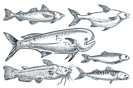 Sea fishes set, isolated on white background. Hand drawn sketch vector illustration. Seafood market food design elements. Doodle drawing of catfish, dorado, mackerel, pollock and herring,