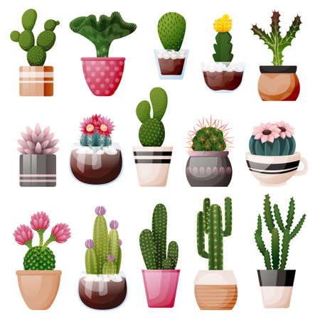 Blooming cactuses and succulents in decorative pots. Home plants, isolated on white background. Vector flat cartoon illustration of green potted houseplants. House room decoration design elements
