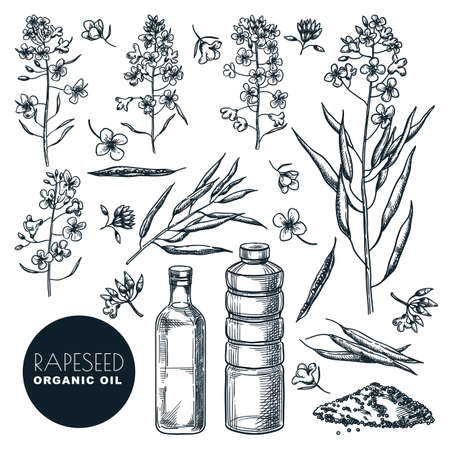 Canola natural vegetable oil isolated on white background. hand drawn sketch illustration. Rapeseed flowers, pods, dried plants set