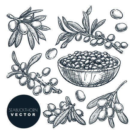 Ripe sea buckthorn berries on branch, in bowl, sketch vector illustration. Sweet autumn harvest, hand drawn food isolated design elements Stock Illustratie