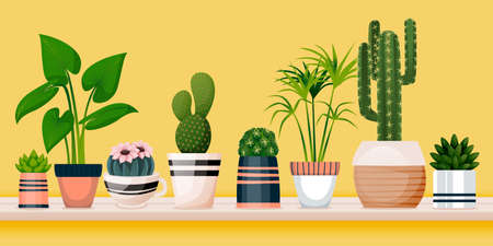 Home plants in decorative pots on shelf against yellow wall. Vector flat cartoon illustration of green potted houseplants. House room decoration design elements. Banner background with copy space