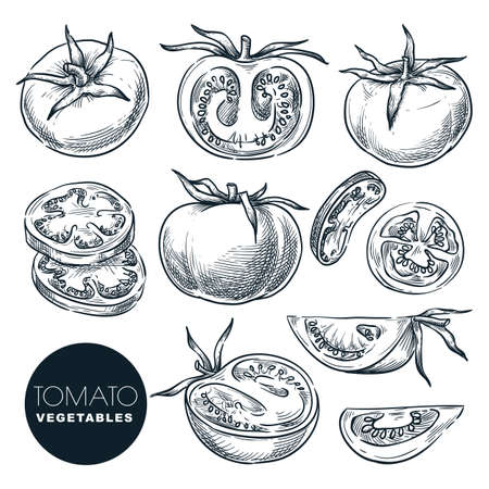Farm fresh tomato, isolated on white background. Sketch vegetables vector illustration. Sliced salad veggie ingredient. Hand drawn agriculture harvest isolated design elements Stock Illustratie