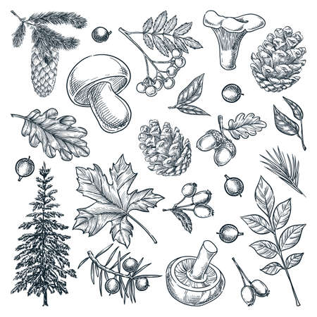 Autumn forest trees, mushrooms, plants and leaves set, isolated on white background. Vector hand drawn sketch illustration. Fall nature design elements