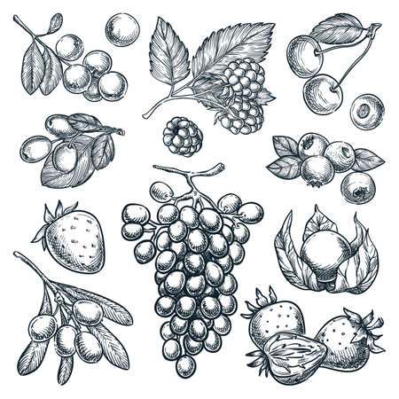 Ripe berries collection isolated on white background. Hand drawn sketch vector illustration of raspberry, blueberry, strawberry, cranberry, grape and goji harvest
