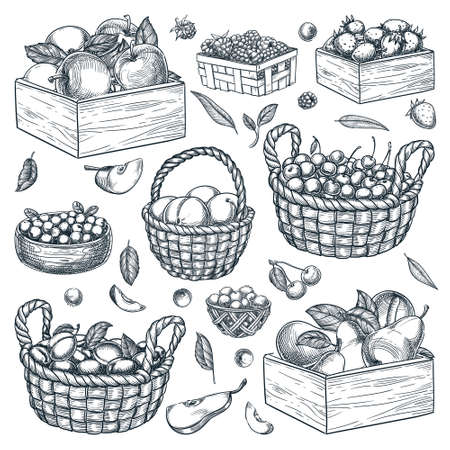 Baskets, wooden boxes, containers with berries and fruits isolated on white background. Hand drawn sketch vector illustration of raspberry, blueberry, strawberry, cranberry, peach and apple harvest