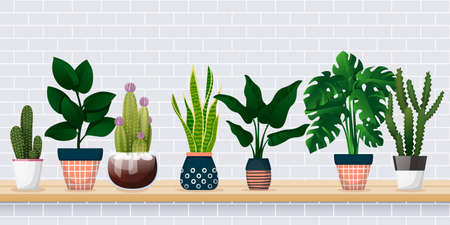 Home plants in decorative pots on shelf against white brick wall. House room decoration design elements. Banner background with copy space. Vector flat cartoon illustration of green potted houseplants