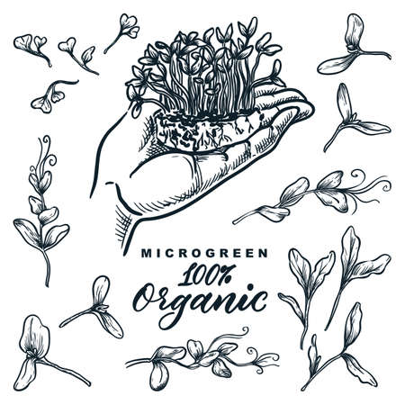 Microgreen sprouts set, hand drawn isolated design elements. Hand holds growing herbs and plants, sketch vector illustration. Natural organic food ingredients