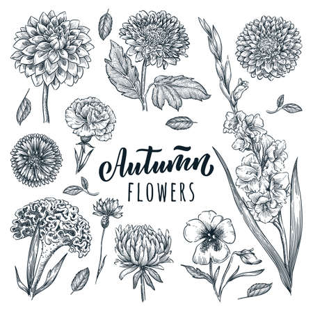 Autumn beautiful flowers set, isolated on white background. Vector hand drawn sketch illustration. Blooming garden plants and floral nature design elements Illusztráció