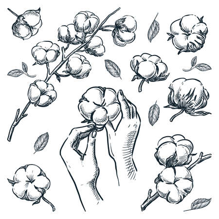 Natural stem with cotton raw flowers. Human hands holding soft cotton ball. Organic design elements set isolated on white background. Vector hand drawn sketch illustration Illusztráció