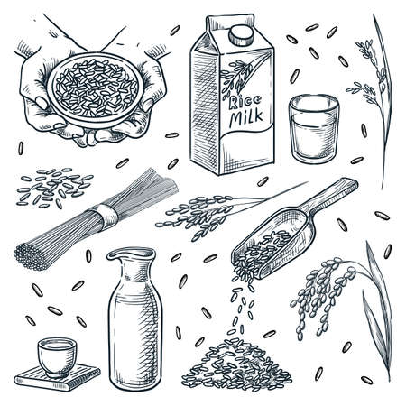 Products made from rice isolated on white background. Vegetarian food design elements set. Rice milk, sake, noodles and rice grain hand drawn sketch vector illustration