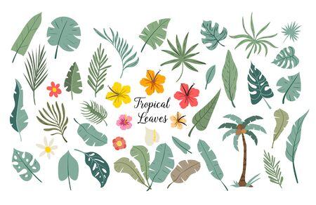 Vector set of tropical leaves. Palm, monstera, banana leaf, hibiscus, plumeria flowers. Illustration