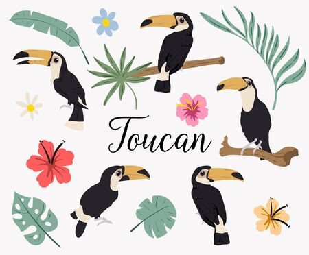 Vector set of toucan birds on tropical branches with leaves and flowers. Vector set of tropical leaves. Palm, monstera, banana leaf, hibiscus, plumeria flowers. South America flora and fauna.