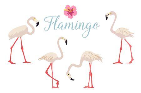 Cartoon pink flamingo vector set Cute flamingos collection Flamingo character animal exotic nature wild fauna. Illustration