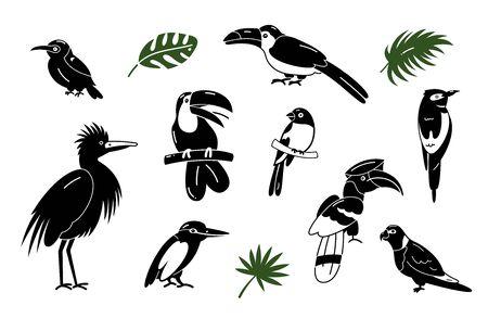 Set of birds. Bright exotic tropical birds. Macaw, Cockatoo, toucan, etc. Vector.