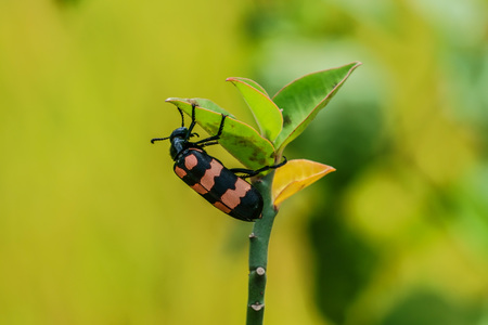 Beetle and young shoots