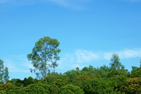 Trees on hill against a bright blue sky