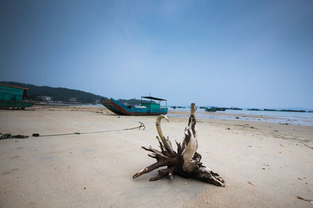 albero secco: vecchia nave e albero secco