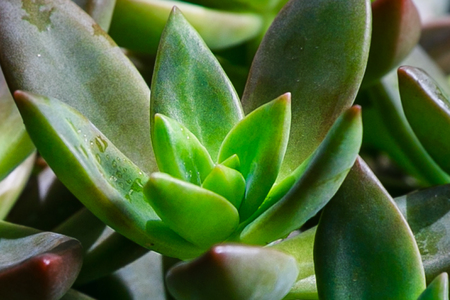 Succulent with water droplets photo