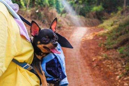 Dog pet travel chihuahiua photo