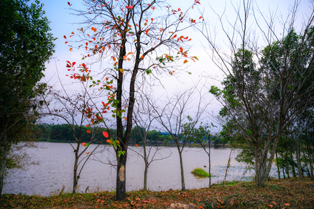 Red leaf tree by the lake photo