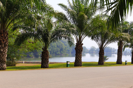 riverside county: Palm trees in golf Stock Photo