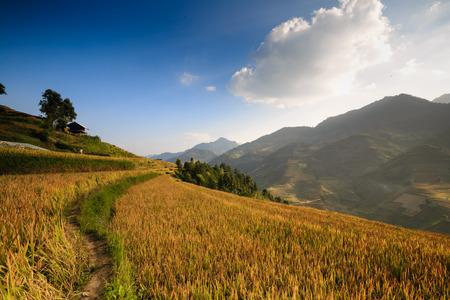 terraced: Terraced rice field in North of vietnam