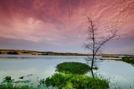 albero secco: Albero secco solitario su un lago deserto