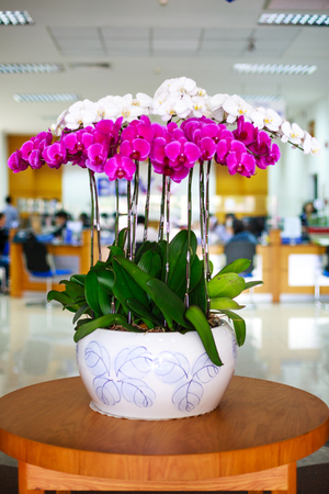 clay pot: Purple and white orchid in clay pot