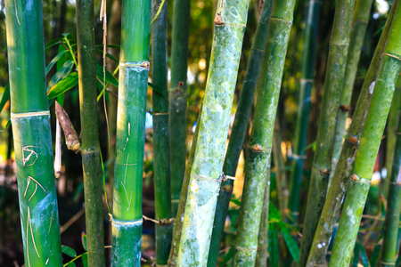 point and shoot: Bamboo Forest Stock Photo