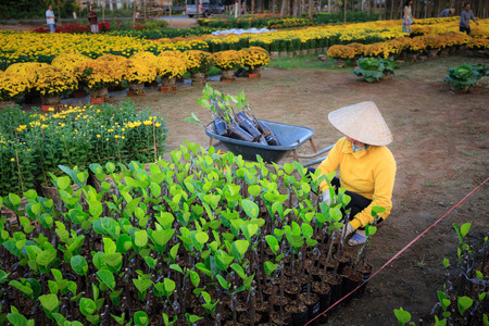 Asian women are caring for gardens photo