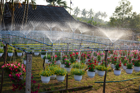 automatic: Automatic Sprinkler Watering Flowers