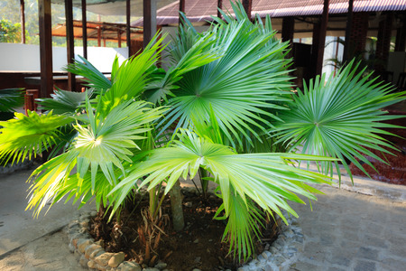 thick growth: Tropical foliage