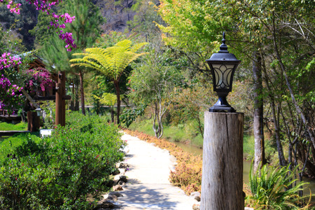 confined: Lamp on footpath in the garden