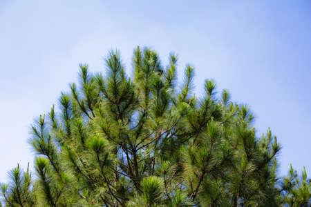 evergreen: Evergreen