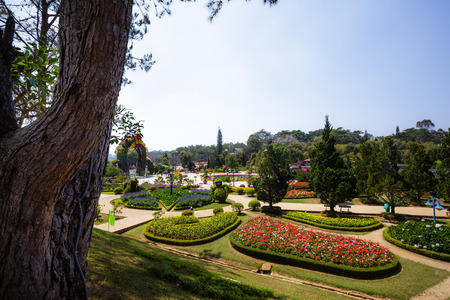 flower garden path: Park